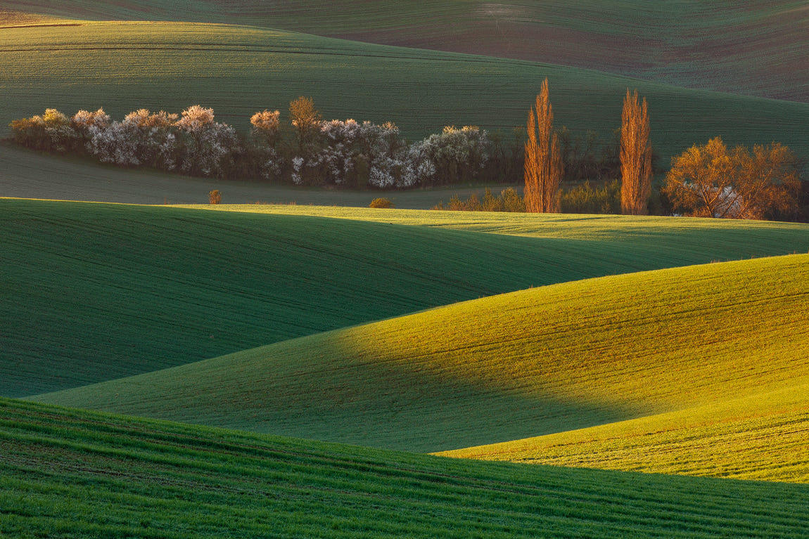 Morning Light in South Moravia